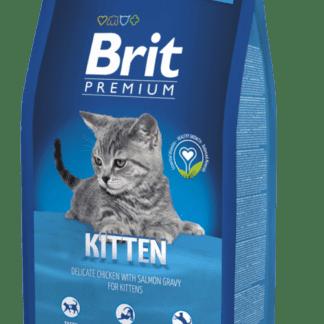 brit kitten