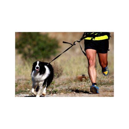 jogging-leash